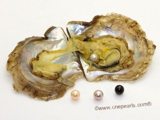 oyster012 Single vacuum-packed pearl oysters with AA+ Grade Round pearls
