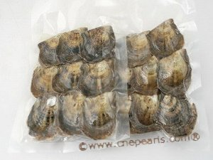 Rewekold 6 PCS Vacuum Packaging Mussel Oyster Drop Pearl Pendant Pearls Hanging Jewelry Organizers